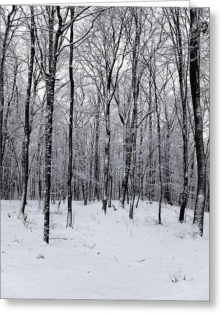 Snowy Day Greeting Cards - Wintertime Greeting Card by Gabriela Insuratelu