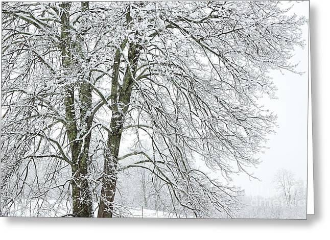 Wintertime In West Virginia Greeting Card by Thomas R Fletcher