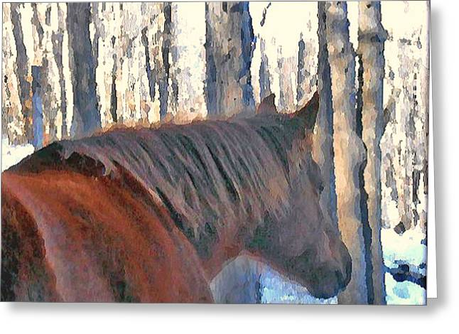 Wintertime Moments With The Paso Fino Mare Greeting Card by Patricia Keller