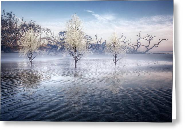 Wintery Coast Greeting Card by Debra and Dave Vanderlaan