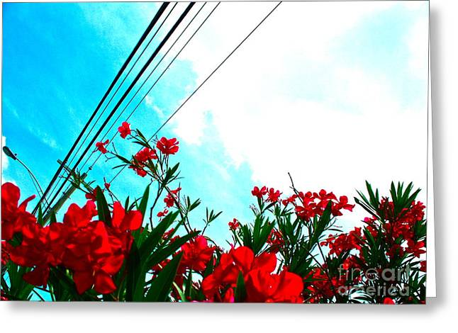 Wire Flowers Greeting Card by Chuck Taylor