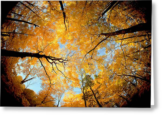 Wisconsin Canopy Greeting Card by Todd Klassy