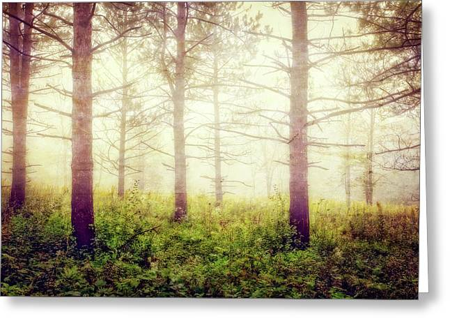 Wisconsin Foggy Forest Greeting Card by Jennifer Rondinelli Reilly - Fine Art Photography