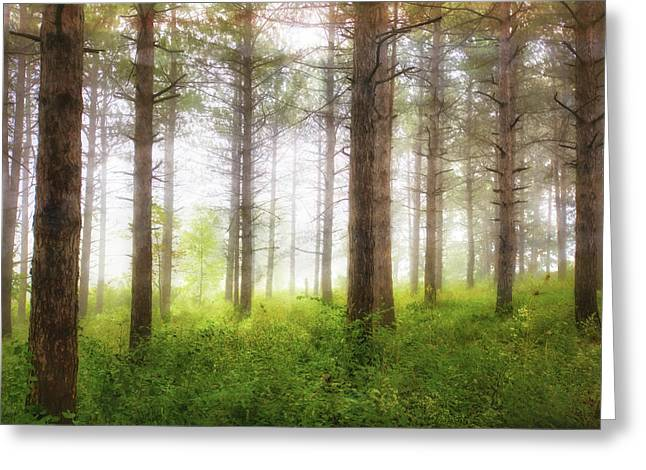 Wisconsin Forest Greeting Card by Jennifer Rondinelli Reilly - Fine Art Photography