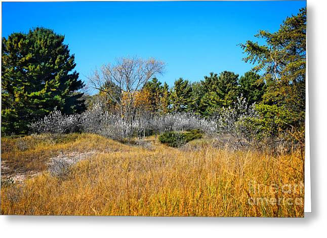 Wisconsin Kohler Andrae State Park Greeting Card