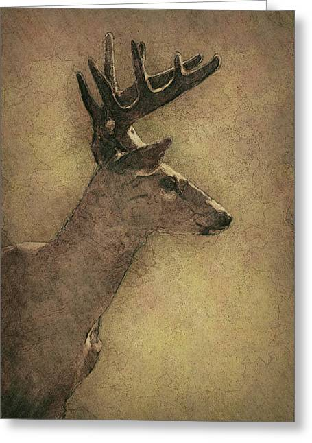 Wisconsin White Tail Buck Sketch Greeting Card by Jack Zulli