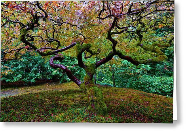Greeting Card featuring the photograph Wisdom Tree by Jonathan Davison