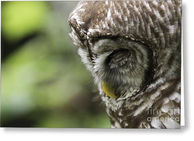 Wise 'ol Owl Greeting Card