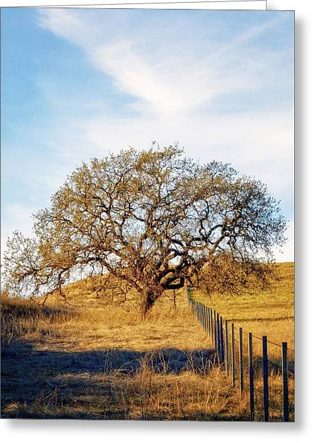 Wise Old Tree Greeting Card by Aron Kearney