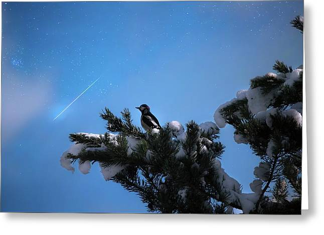 Wish Upon A Shooting Star Greeting Card by Rose-Marie Karlsen