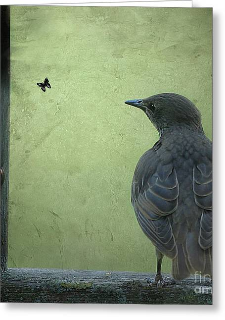 Greeting Card featuring the photograph Wishful Thinking by Jan Piller