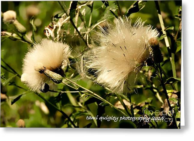 Wisp Of A Summer Morn Greeting Card