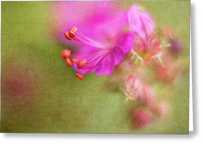 Wisp Of Spring Greeting Card by Sharon Johnstone