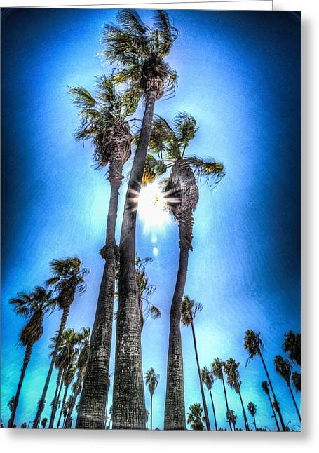 Greeting Card featuring the photograph Wispy Palms by T Brian Jones