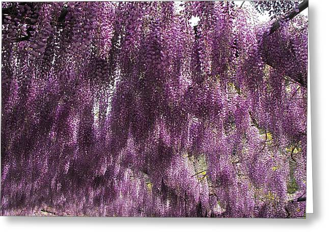 Wisteria Arbor At The Bardini Gardens Greeting Card by Gerald Hiam