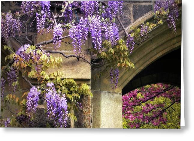 Wisteria Blossom Greeting Card by Jessica Jenney