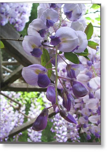 Wisteria In The Garden 2 Greeting Card