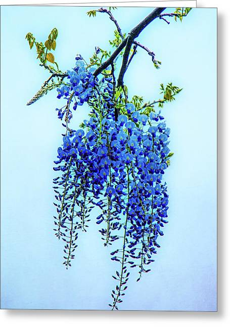 Greeting Card featuring the photograph Wisteria by Chris Lord