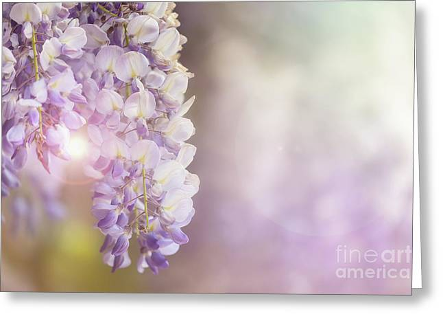 Wisteria Flowers In Sunlight Greeting Card by Jane Rix