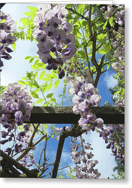Wisteria In The Garden Greeting Card