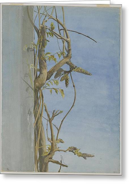 Wisteria On A Wall Greeting Card