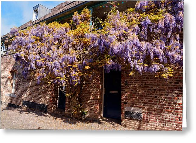 Wisteria Over A Doorway In Old Town Maastricht Netherlands Greeting Card