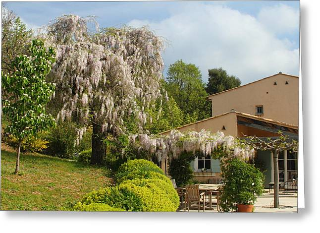 Greeting Card featuring the photograph Wisteria by Richard Patmore