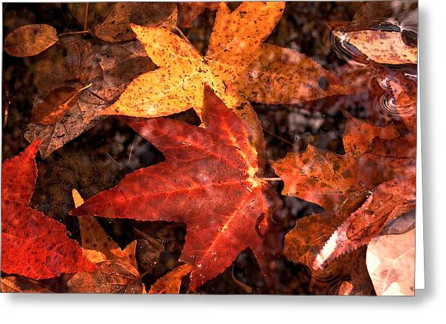 With Love - Autumn Pond Greeting Card by Theresa  Asher