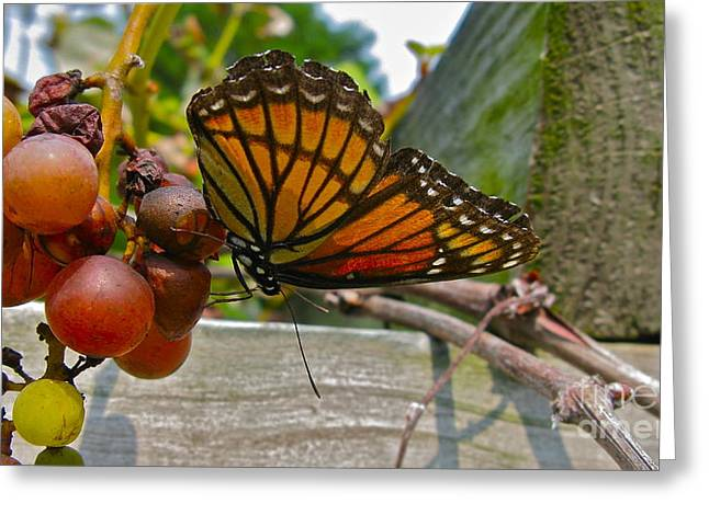 With The Grape Greeting Card by PJ  Cloud