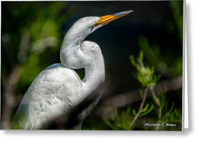 Greeting Card featuring the photograph White Egret 2 by Christopher Holmes