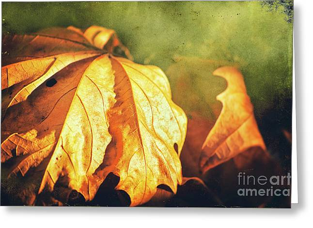 Greeting Card featuring the photograph Withered Leaves by Silvia Ganora