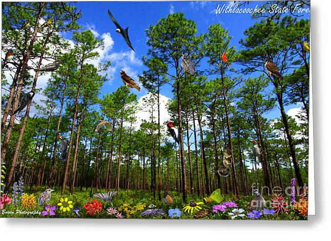 Withlacoochee State Forest Nature Collage Greeting Card by Barbara Bowen