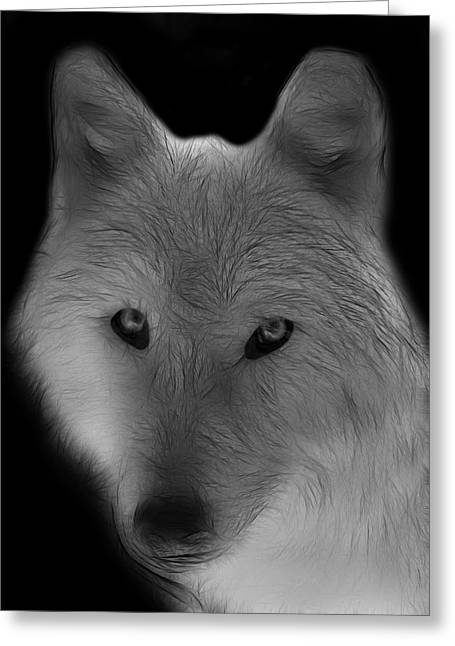 Wolf - Black And White Greeting Card by Sandy Keeton