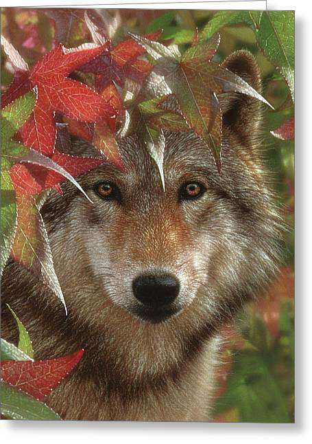 Wolf - Autumn Encounter Greeting Card