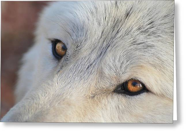 Greeting Card featuring the photograph Wolf Eyes by Carolyn Dalessandro