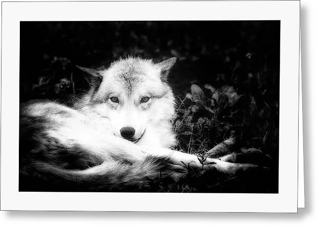 Wolf Grin Greeting Card