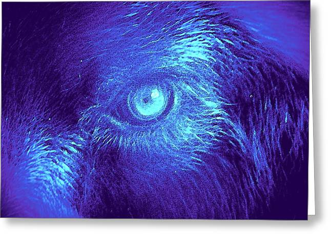 Greeting Card featuring the painting Wolf In Blue by David Mckinney