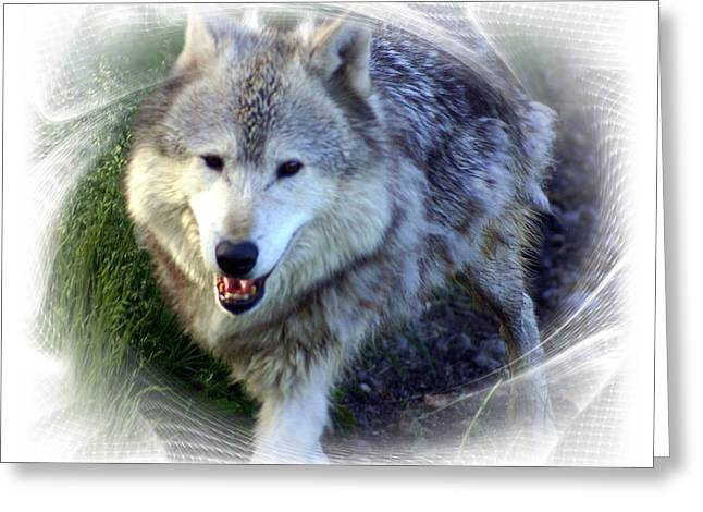 Wolf Greeting Card by Marty Koch