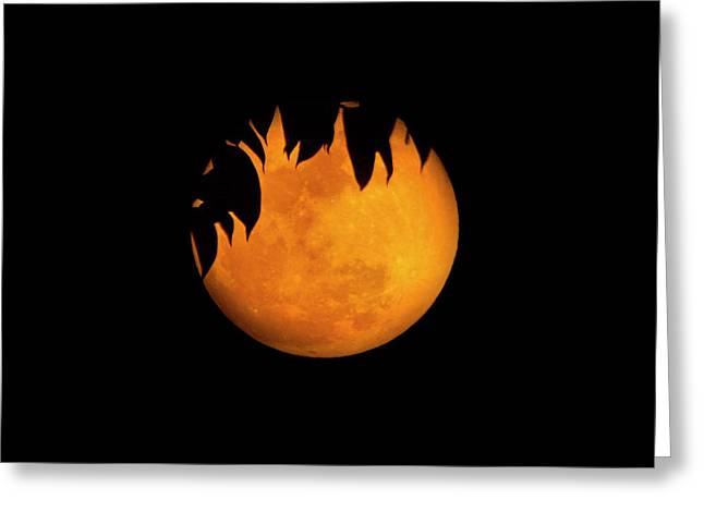 Wolf Moon Greeting Card by Mark Andrew Thomas