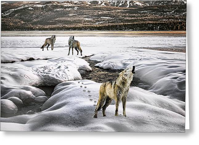 Wolf Pack Howling Greeting Card by Janet Ballard