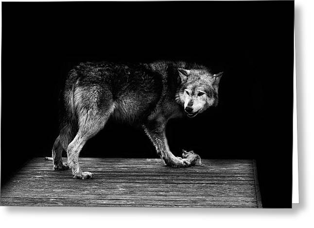 Wolf Portrait Greeting Card by Martin Newman