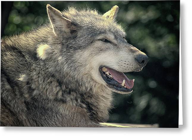 Wolf Rock Greeting Card by Martin Newman