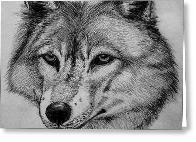 Wolf Sketch Greeting Card