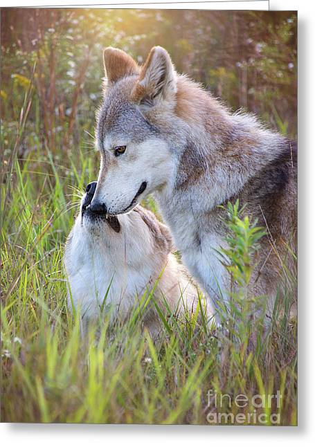 Wolf Soul Mates Greeting Card