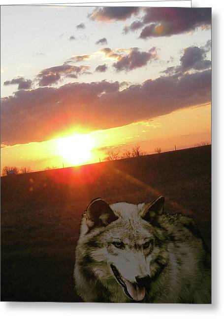 Wolf From The Forest Greeting Cards - Wolf Sunset Greeting Card by Debra     Vatalaro