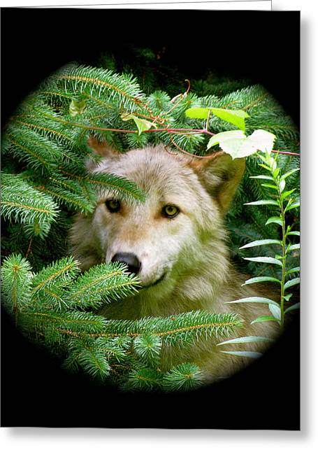 Wolf From The Forest Greeting Cards - Wolf Thick Of The Woods Greeting Card by Debra     Vatalaro