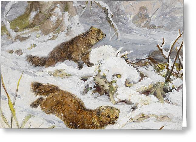 Wolverines In The Snow Greeting Card