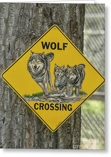 Wolves Crossing Greeting Card