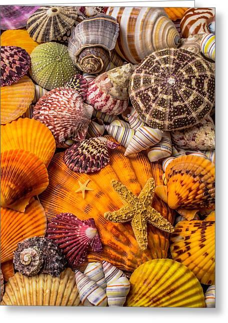 Womderful Seashells Greeting Card by Garry Gay
