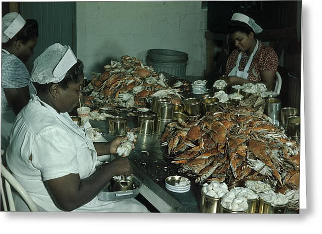 Women Pick And Pack Crab Meat Into Cans Greeting Card